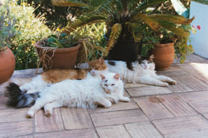 cat allergy can now be elimi8nated